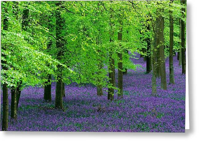 Purple Flower Carpet For Green Trees Greeting Card