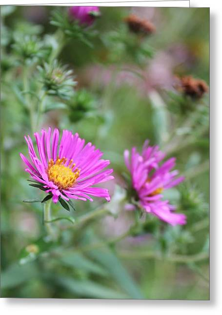 Greeting Card featuring the photograph Purple Flower by Laurinda Bowling