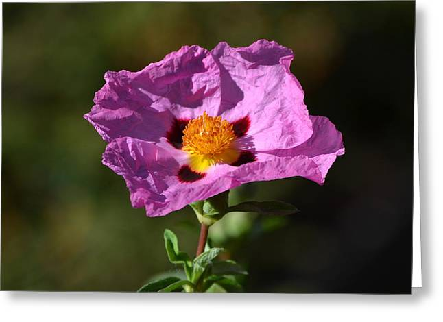 Greeting Card featuring the photograph Purple Flower by Rima Biswas