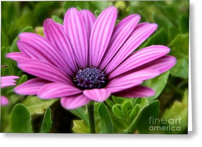 Purple Flower Greeting Card by Sara  Mayer