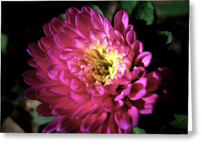 Purple Flower Greeting Card by Sumit Mehndiratta