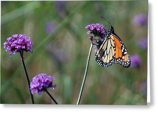 Purple Flower With Butterfly Greeting Card