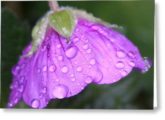 Purple Geranium Detail Greeting Card