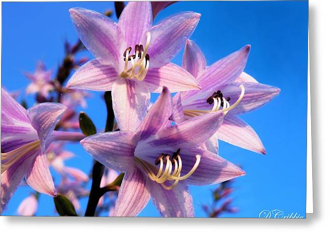 Greeting Card featuring the photograph Purple Hosta Blooms by Davandra Cribbie