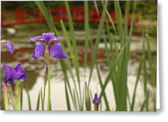 Greeting Card featuring the photograph Purple Iris by Coby Cooper