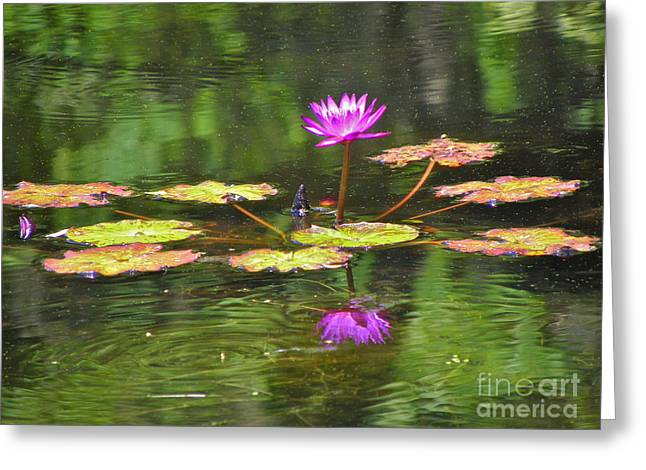 Greeting Card featuring the photograph Purple Lily Pad by Eve Spring