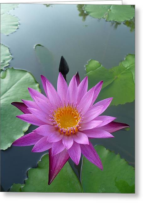 Purple Lotus In A Pond Greeting Card by Gregory Smith