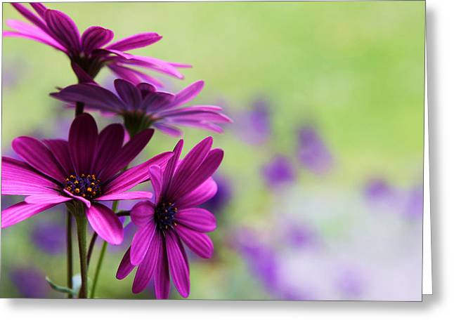 Purple Love Greeting Card by Penny Haviland