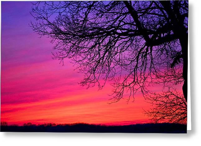 Purple Majesty Greeting Card by Brenda Becker