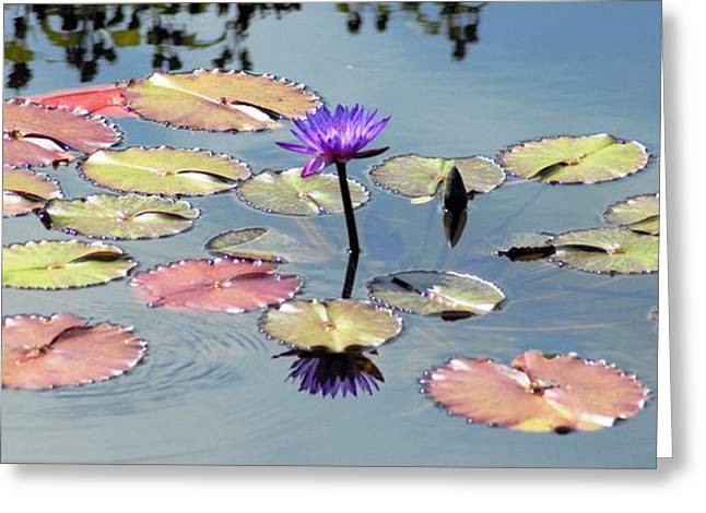 Purple Mirror Greeting Card by