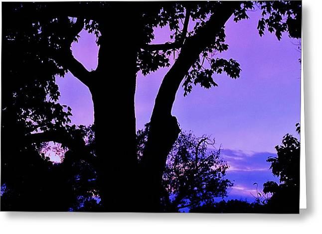 Purple Morning Greeting Card by Todd Sherlock