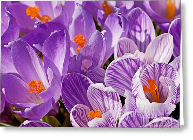 Purple Oh Purple Greeting Card