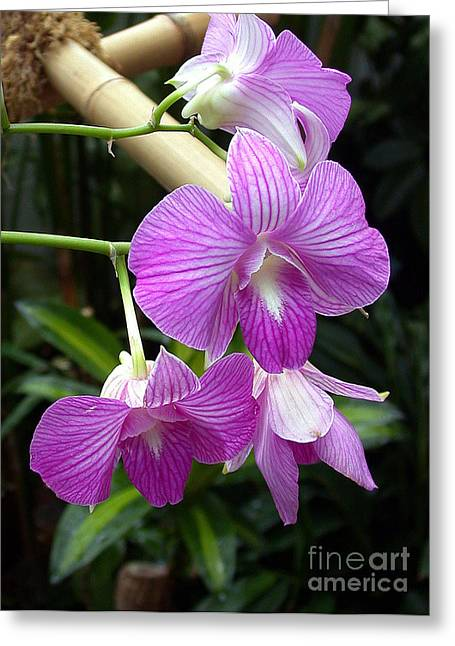 Purple Orchid Greeting Card