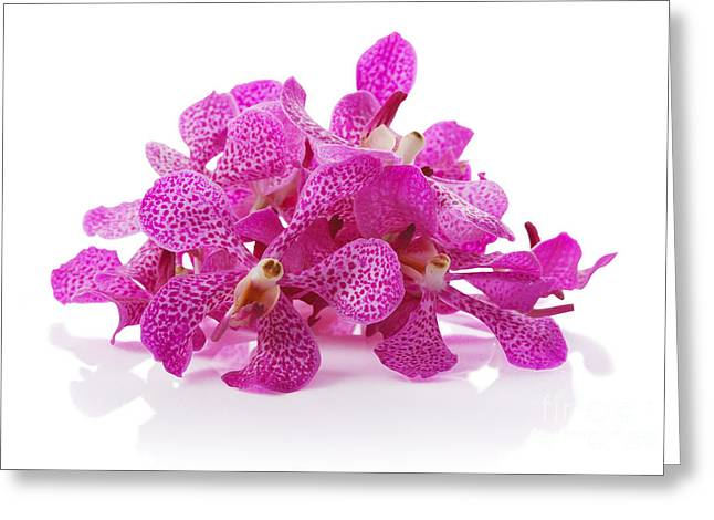Purple Orchid Pile Greeting Card