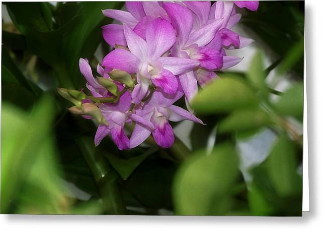 Purple Orchids Greeting Card by Dumindu Shanaka
