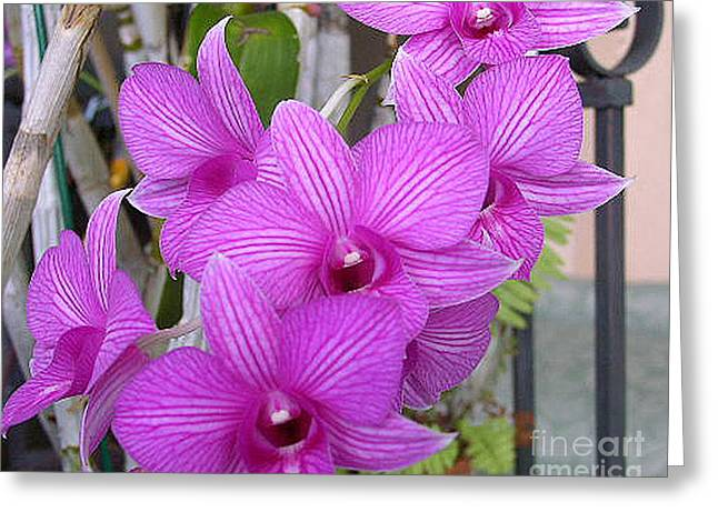 Purple Orchids Greeting Card by Merton Allen