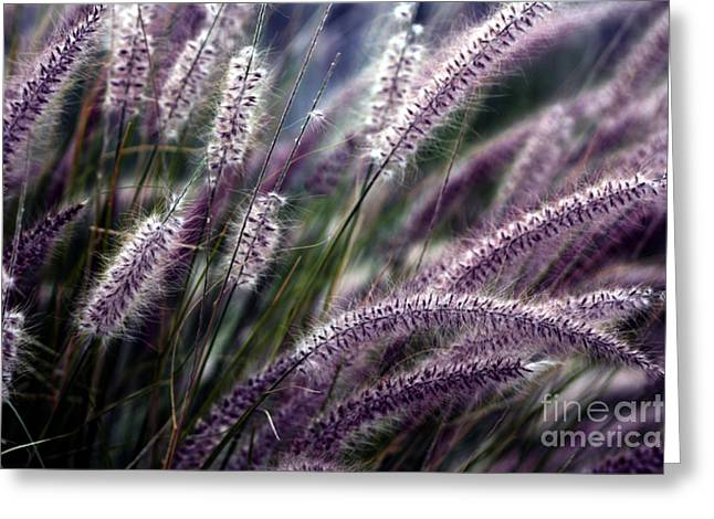 Purple Ornamental Fall Grass Greeting Card by Marjorie Imbeau