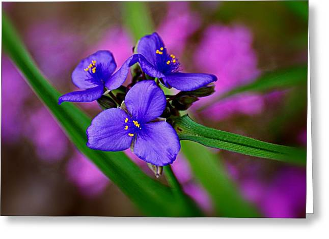 Purple Passion Greeting Card by Marty Koch