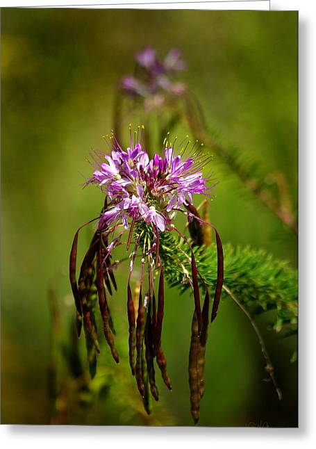 Greeting Card featuring the photograph Purple Pizzazz by Vicki Pelham