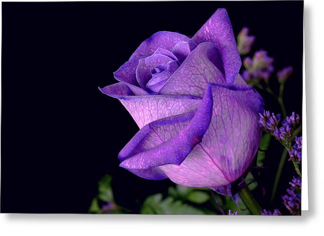 Purple Rose Greeting Card by Darren Fisher