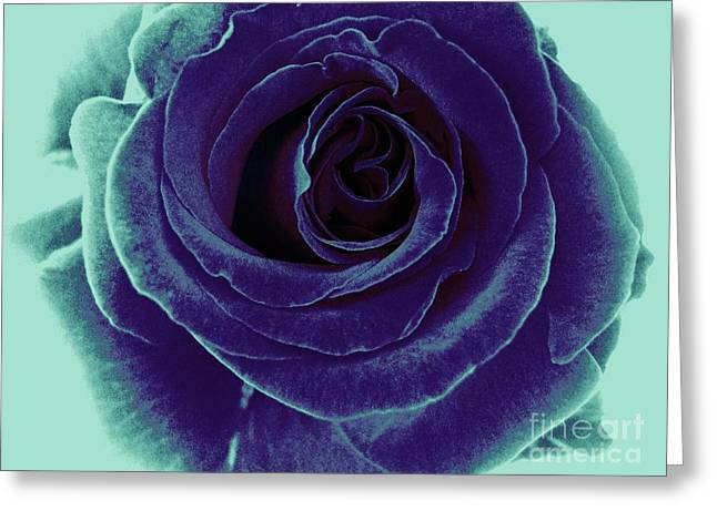 Greeting Card featuring the photograph Purple Rose by Jasna Gopic