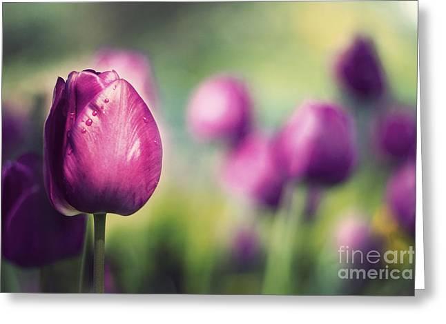 Purple Tulips Greeting Card by Catherine MacBride