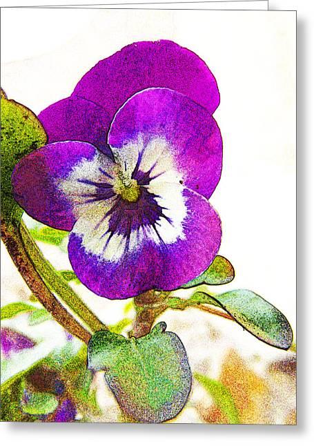 Purple Viola Greeting Card by Robin Hewitt