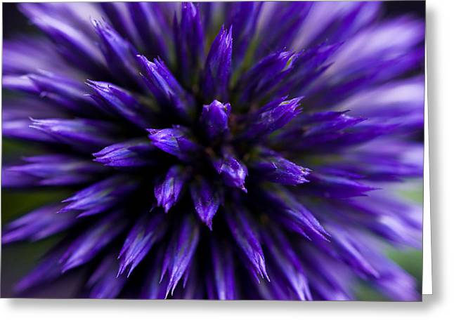 Greeting Card featuring the photograph Purple Zoom by Trevor Chriss