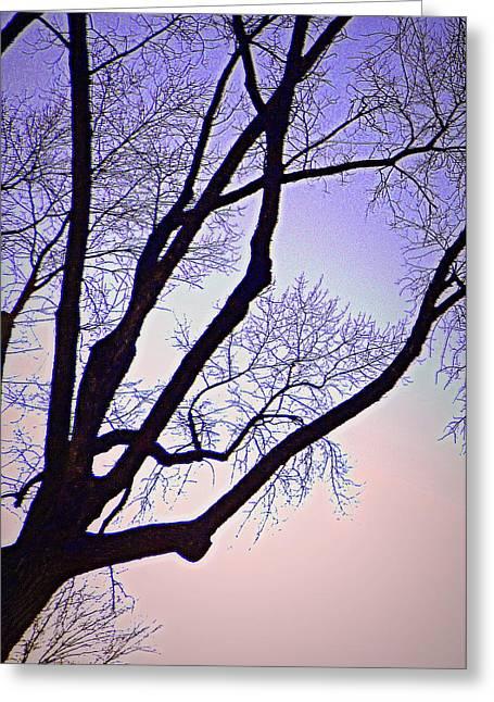 Purpler Branch Greeting Card by Dan Stone