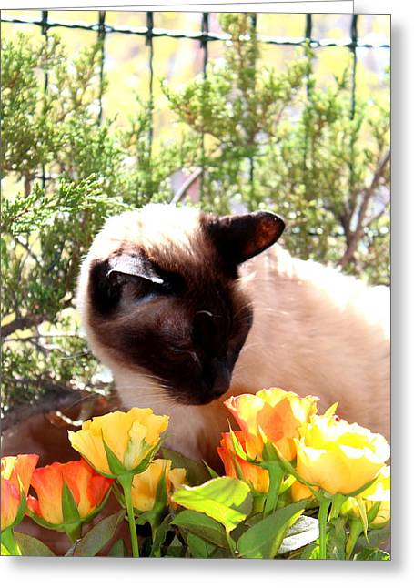 Purrfect Scent Greeting Card by Sonja Bonitto