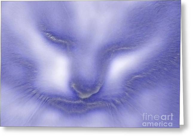 Greeting Card featuring the photograph Digital Puss In Blue by Linsey Williams