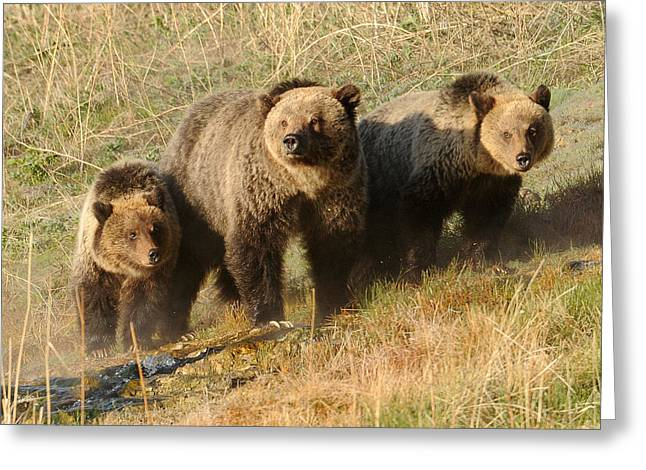 Quad Mom At Mammoth Terraces I Greeting Card by Amy Gerber