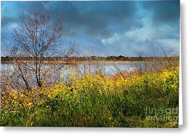 Quarry Lakes In Fremont California . 7d12643 Greeting Card by Wingsdomain Art and Photography