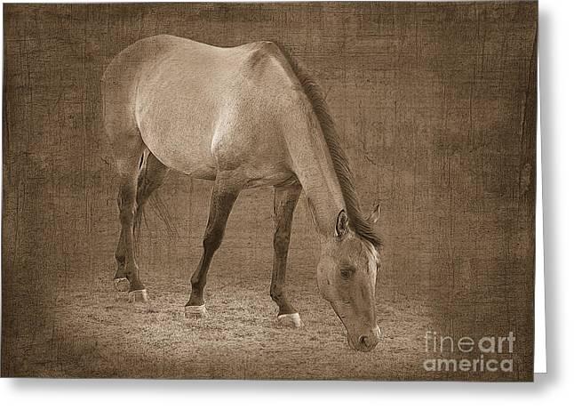 Quarter Horse In Sepia Greeting Card