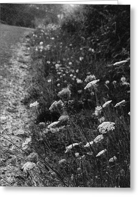 Queen Anne's Lace On Beachcrest Drive In Neskowin Oregon Greeting Card by Christina Weber