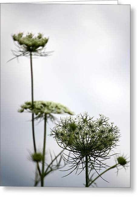 Greeting Card featuring the photograph Queen Annes Lace by Penny Hunt
