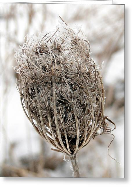 Greeting Card featuring the mixed media Queen Anne's Lace Seed Pods by Bruce Ritchie