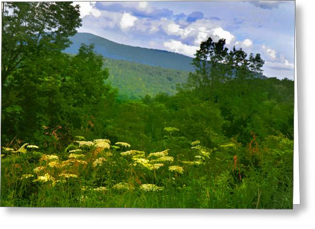Queen Anne's Lace With A View Greeting Card