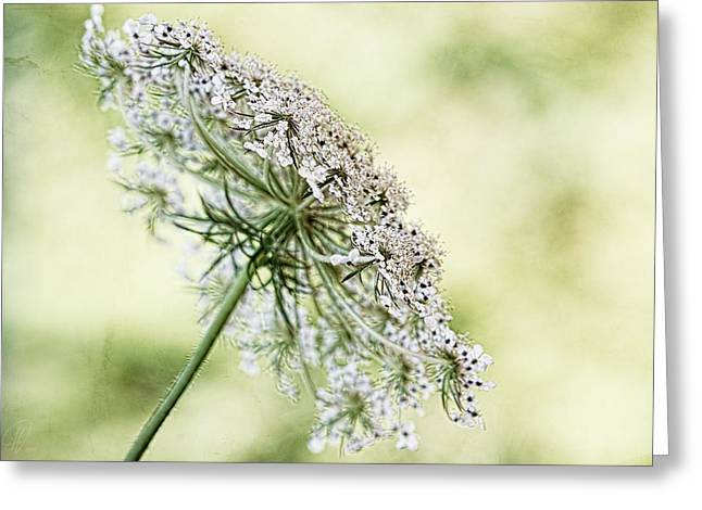 Queen's Lace Greeting Card