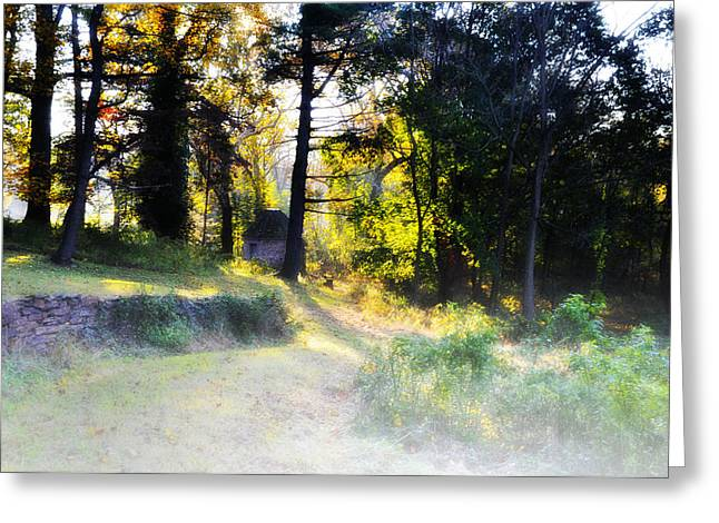 Quiet Morning In The Woods Greeting Card by Bill Cannon