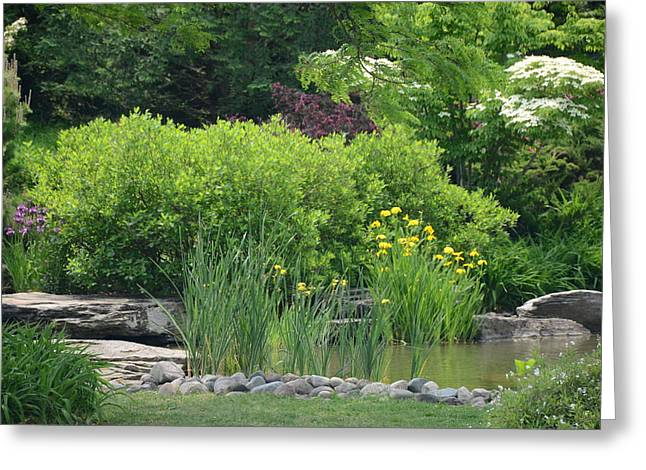Quiet Pond Greeting Card by Michael Carrothers