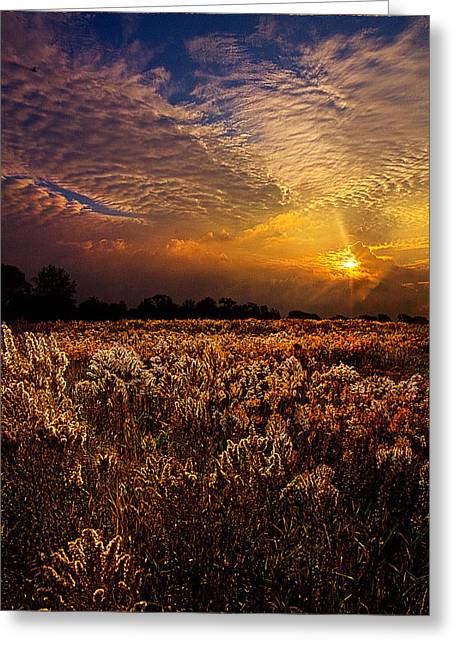 Quiet Winter Greeting Card by Phil Koch