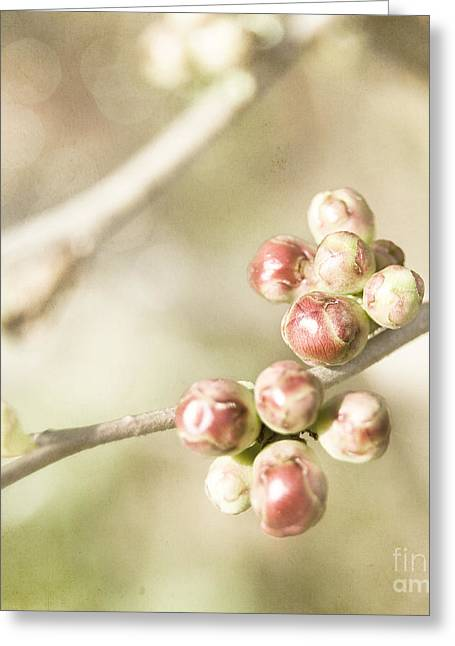 Quince Buds Close-up Greeting Card by Agnieszka Kubica