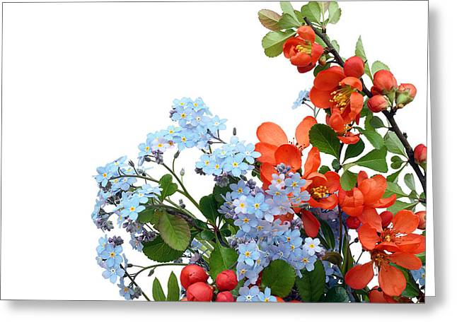 Greeting Card featuring the photograph Quince Chaenomeles And Forget Me Nots Myosotis  Postcard  by Aleksandr Volkov