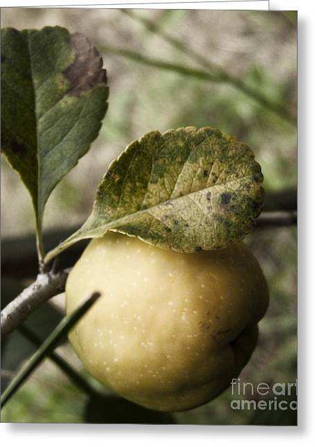 Quince Fruit Greeting Card by Agnieszka Kubica