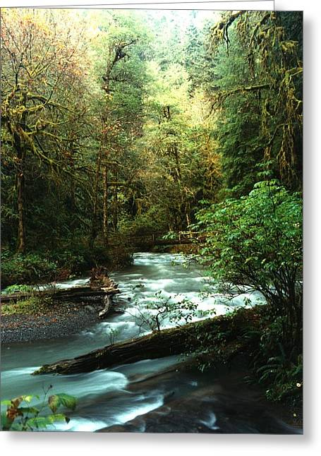 Greeting Card featuring the photograph Quineault Rain Forest by Rick Frost