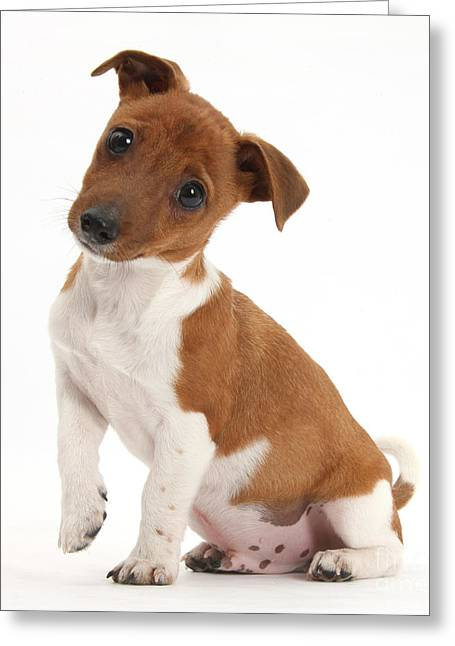 Quizzical Puppy Greeting Card by Mark Taylor