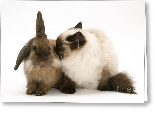 Rabbit And Cat Greeting Card