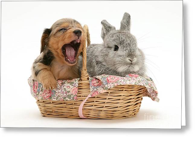 Rabbit And Pup In Basket Greeting Card by Jane Burton