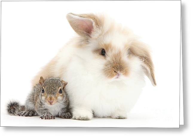 Rabbit And Squirrel Greeting Card by Mark Taylor